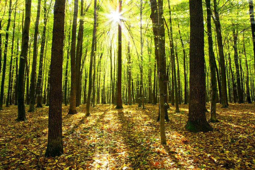 Beheerde bossen voor karton en papier productie
